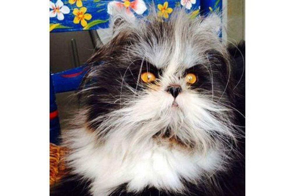 15 chats très (très) moches !