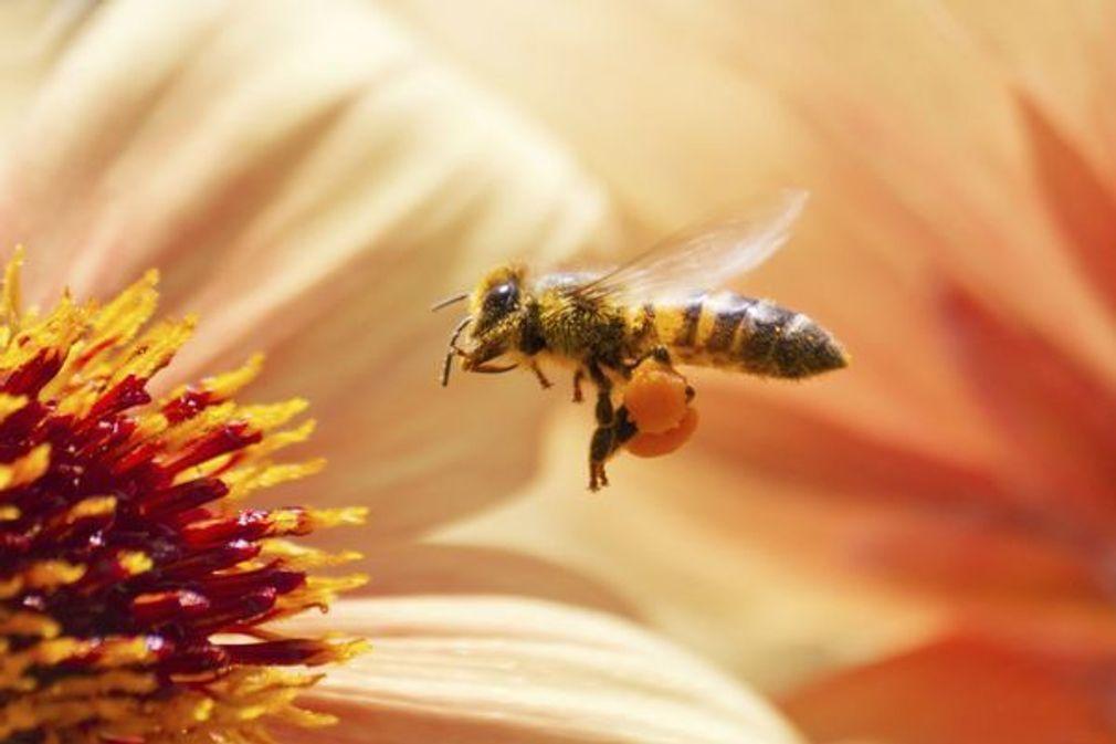 Apithérapie : les bienfaits des produits de la ruche