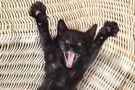 Comportements étranges du chat : quelles sont les causes ?