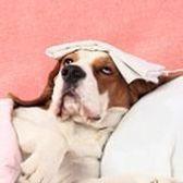 maladies du chien