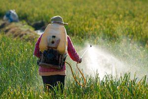 Pesticides : quelle distance entre les cultures et les habitations ?