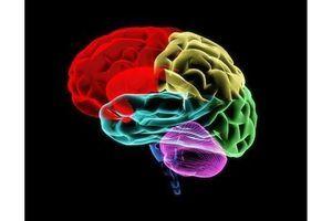 """Une sorte de """"mini-cerveau"""" à partir de cellules souches"""