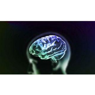 Capacité du cerveau humain