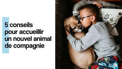 adopter un chien