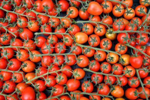 Alerte à une nouvelle maladie végétale qui s'attaque aux tomates