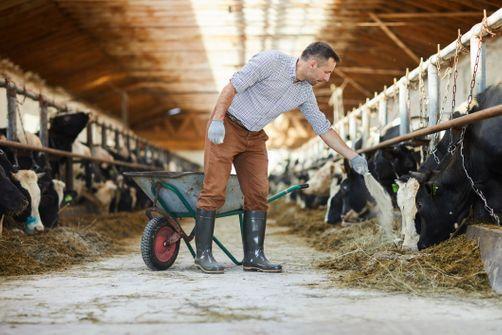 Bien-être animal: Une ONG récompense 34 marques, essentiellement en Europe