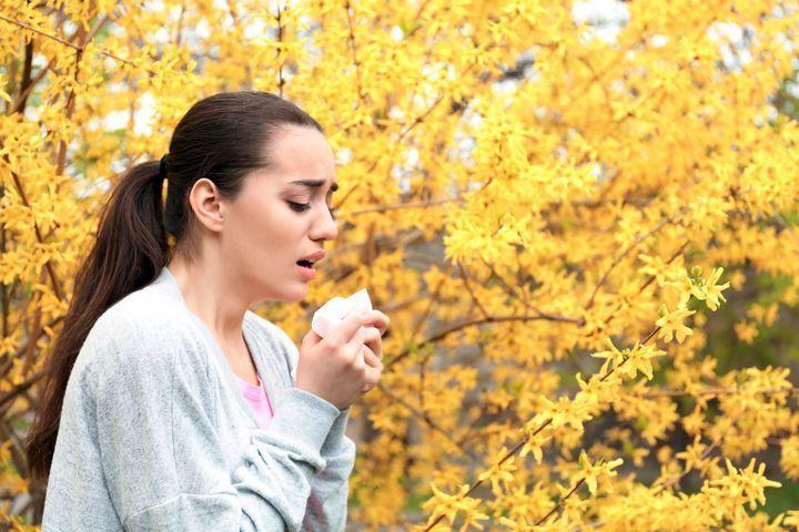 Les saisons des différents pollens