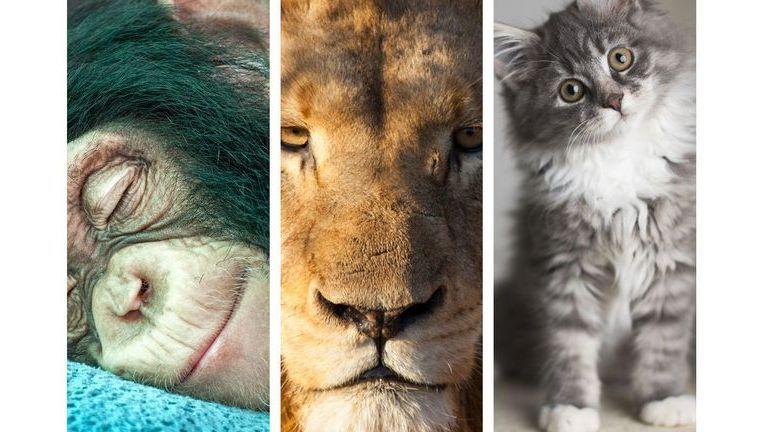 Quel est votre animal totem ?