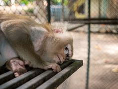 Barbara Pompili décide la fermeture du parc animalier des 3 vallées