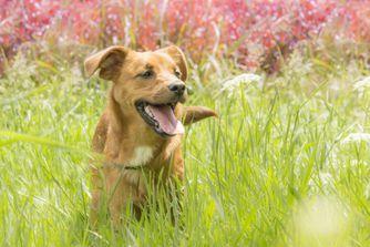 Coups de chaleur chez le chien : de la prévention au traitement