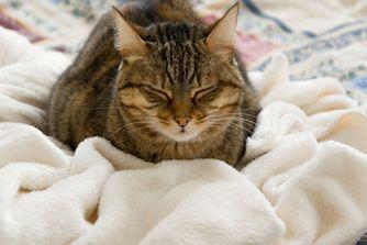 Mon chat tousse ou éternue
