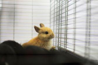 Bien choisir la cage de son lapin