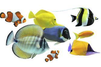 Les principales espèces de poissons
