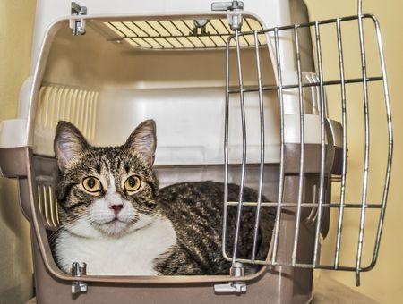 Cage pour chat ou sac de transport : que choisir ?