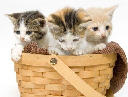 Comment choisir un chaton dans une portée ?
