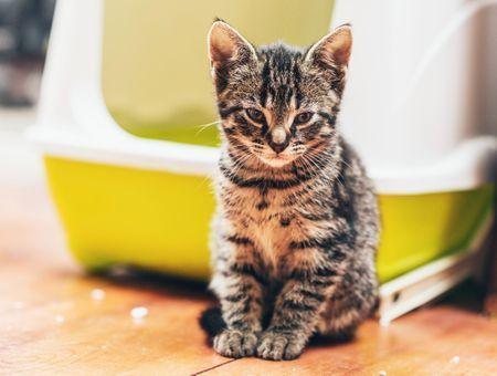 Comment apprendre la propreté à un chat ?
