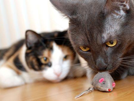 Les jeux et l'apprentissage du chat