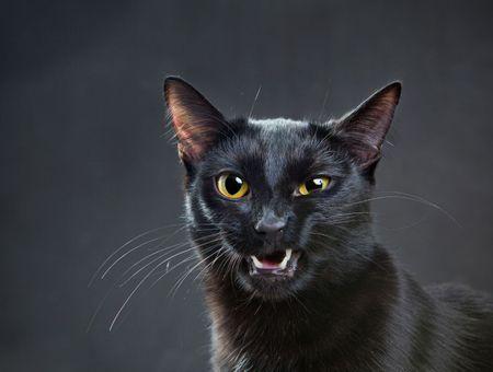 Mon chat bave, explications