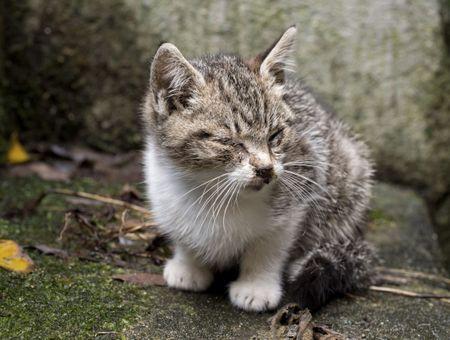 Mon chat a mal au ventre et/ou a des gaz