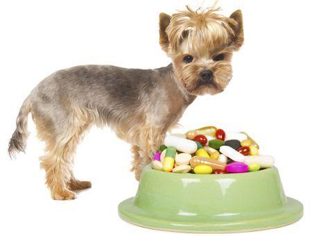 Vitamines et suppléments nutritionnels pour les chiens