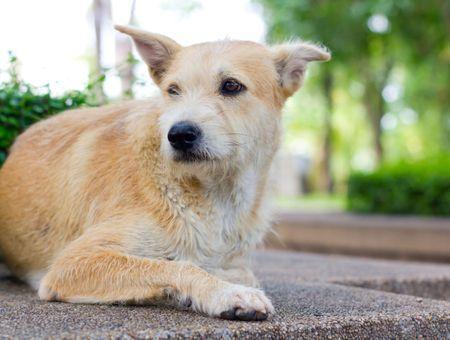 Adopter un chien donné ou errant : ce qu'il faut savoir