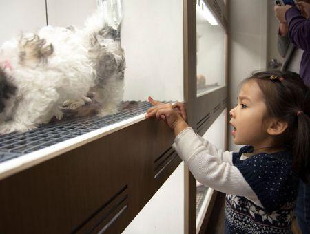 Acheter un chien dans une animalerie : attention