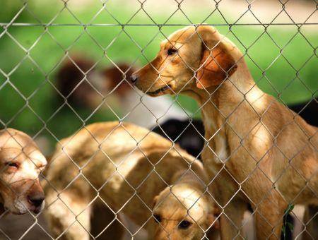 Adopter un chien chez un éleveur : ce qu'il faut savoir