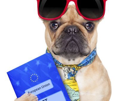 Papiers administratifs du chien