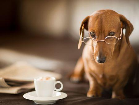 Intelligence du chien : ce qu'il faut savoir