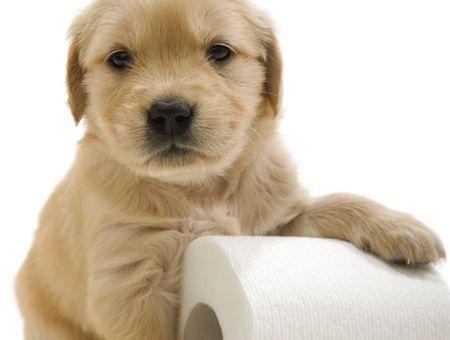 Mon chien a la diarrhée