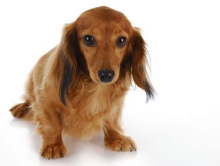 Mon chien a mal au ventre/a des gaz : que faire ?