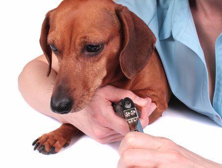 Prendre soin des griffes de son chien