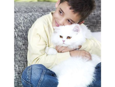 Maladies transmises par les chats