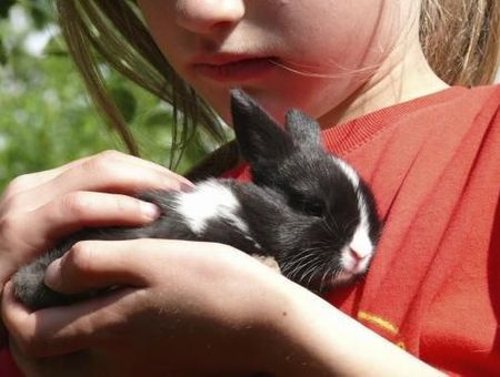 Le VHD ou maladie virale hémorragique du lapin : un virus variant insidieux