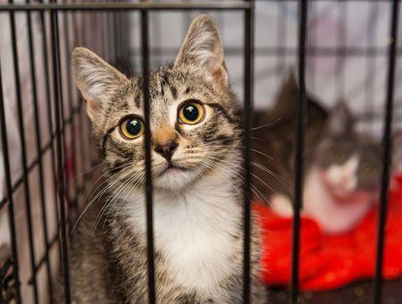 Avec le confinement, les gens ont pris conscience des bienfaits des animaux domestiques