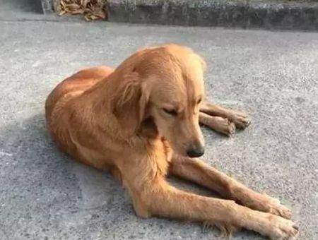 En Chine, un chien parcourt 100 km pour retrouver ses propriétaires