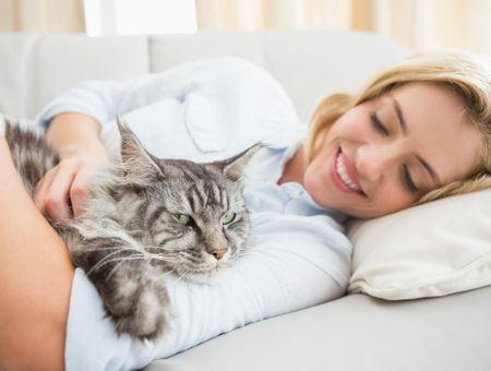 Une application pour comprendre les miaulements de votre chat