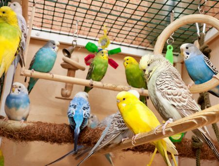Quelles sont les principales espèces d'oiseaux domestiques ?