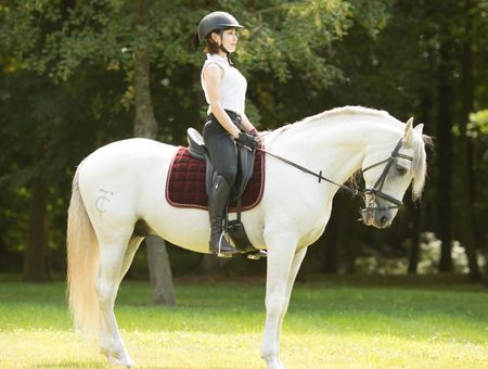 Equitation : ce qu'il faut savoir