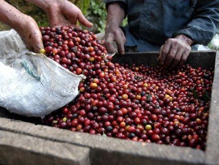 Le Robusta, un café simple et de bon goût