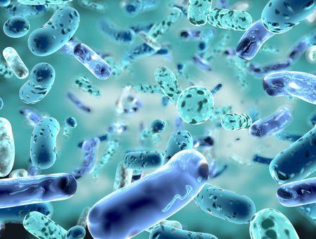 Maladies articulaires inflammatoires : le microbiote intestinal en cause