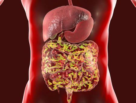 L'influence du microbiote intestinal sur les cancers