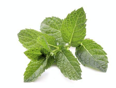 Huile essentielle de menthe verte : bienfaits et utilisations
