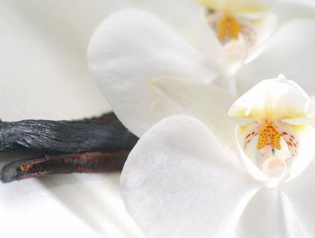 Huile essentielle de vanille : propriétés et utilisations