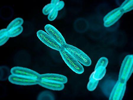 Qu'est-ce qu'un caryotype ?