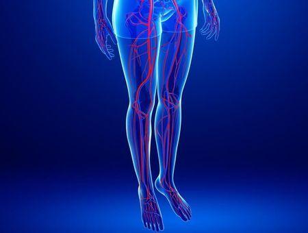 Comment fonctionne le système veineux des jambes ?