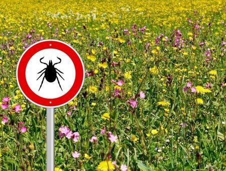 Comment se pose le diagnostic de la maladie de Lyme ?