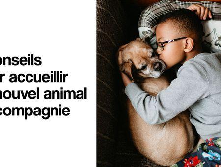 5 conseils avant d'adopter un animal