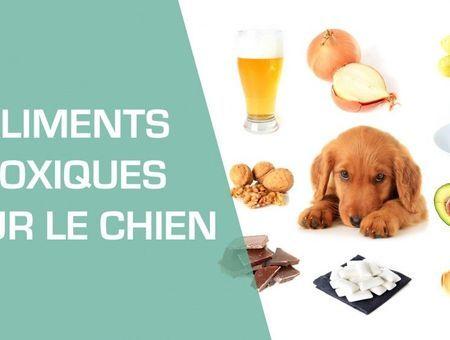Les aliments toxiques pour le chien