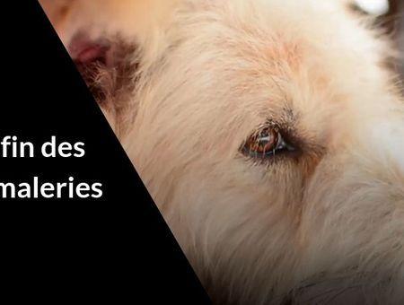 La vente d'animaux d'élevage interdite en animalerie